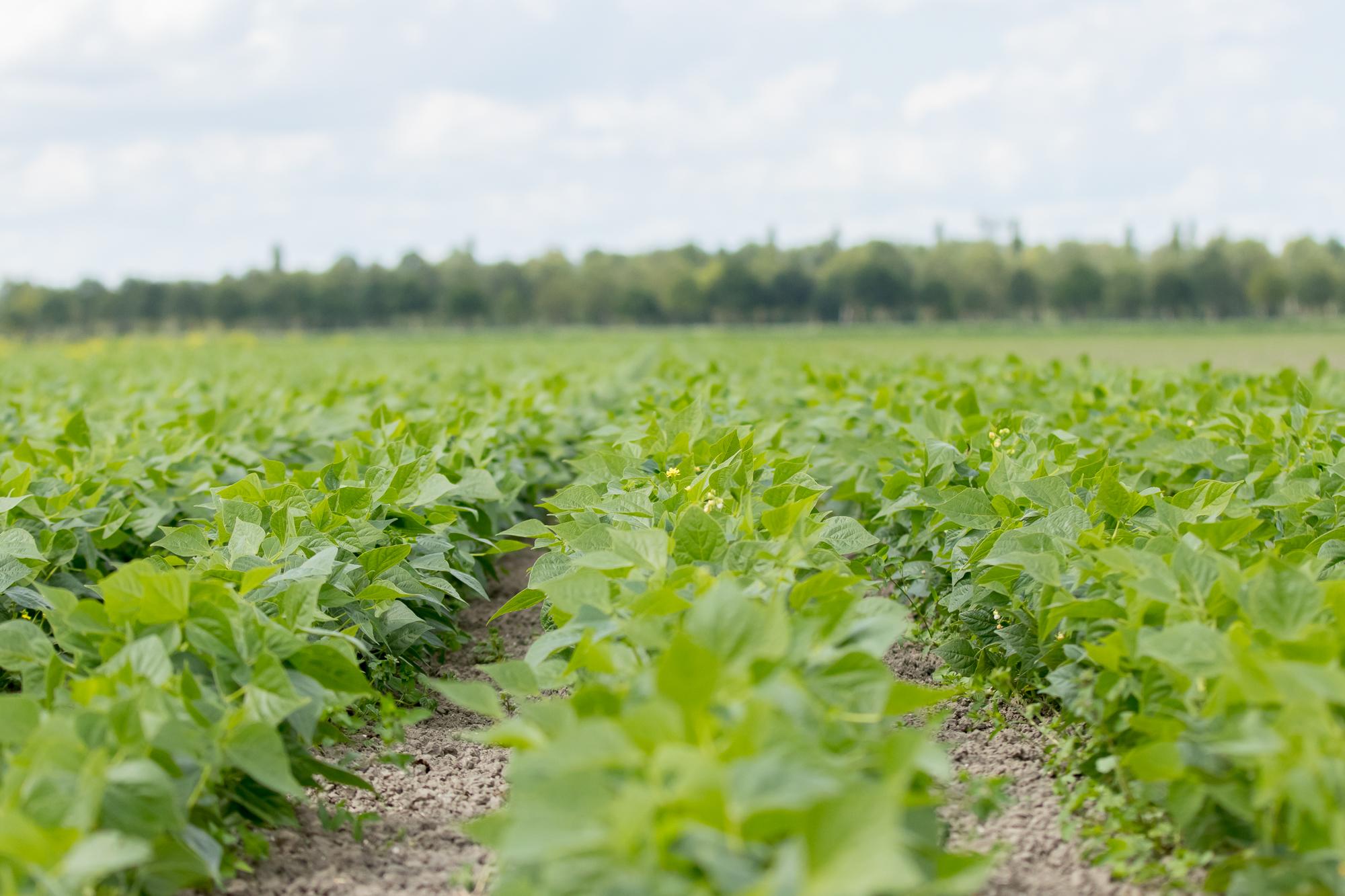 Ideologie industriële landbouw versus logica biologische landbouw